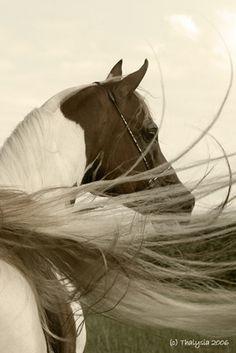 http://globalhorsecents.com #horse #equine #horselover