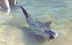 Animal Rights, Western Australia, Dolphins, Animal Rescue, Monkey, Wanderlust, Language, Gallery, Travel