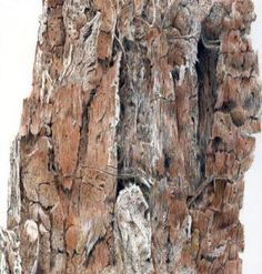 If you enjoy depicting detail with your coloured pencils, you'll enjoy this challenge by Gayle Mason to draw a weathered tree stump.