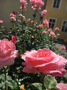Flowers, Plants, Hobbies, Places, Plant, Royal Icing Flowers, Flower, Florals, Floral