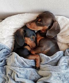 I feel that this is a great representation of me and my husband...using Dachshunds