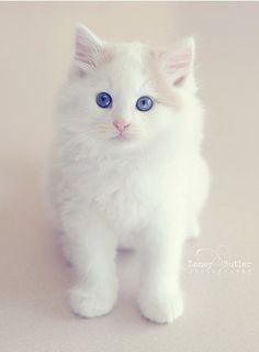 these blue eyes