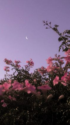 Android Wallpaper – Flower under night sky - Wallpaper - Bilder Tumblr Wallpaper, Android Wallpaper Flowers, Wallpaper Pastel, Night Sky Wallpaper, Iphone Background Wallpaper, Aesthetic Pastel Wallpaper, Aesthetic Backgrounds, Lock Screen Wallpaper, Iphone Backgrounds