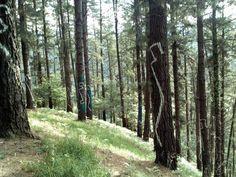 #travel #euskadi país vasco the basque country bosque pintado de oma de autor ibarrola painted forest