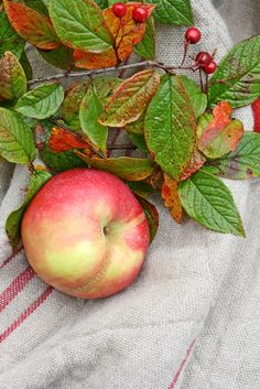 Beautiful photo of apple with leaves and grain sack