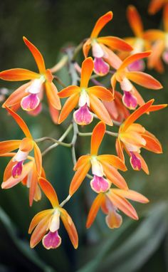 Orange Orchid 2 by casper1830                                                                                                                                                                                 Mais