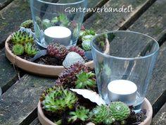 Gartenverbandelt: Windlicht mit Hauswurzen