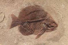 Resultado de imagem para fossils