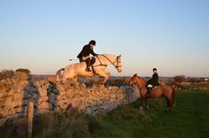 Dec 1st, Galway Ireland, Horses For Sale, Cob, Camel, Hunting, Blue, Animals, Animales