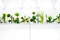 Azuma Makoto- Botanical Sculpture