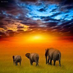elephants + three³