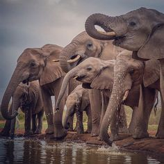 Photo by (Aaron Huey). at the watering hole Eastern Taken from a photo blind about 5 meters way! Check out video from my Botswana shoot all this week at by natgeo Elephant Family, Elephant Love, Elephant Art, African Elephant, Elephant Gifts, Wild Animals Photos, Animals And Pets, Cute Animals, Elephant Photography
