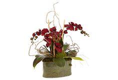 "24"" Orchids in Oval Pot, Burgundy on OneKingsLane.com"