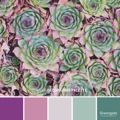 Bedroom Paint Color Schemes and Design Ideas Succulent photo print: succulent art, plant photo decor Paint Color Schemes, Colour Pallete, Color Combos, Sage Color Palette, Color Palettes, Decoration Photo, Desert Colors, Bedroom Paint Colors, Color Balance