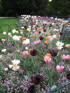 Back Gardens, Small Gardens, Outdoor Gardens, Cut Flower Garden, Flower Farm, Colorful Garden, Plantation, Yard Landscaping, Dream Garden