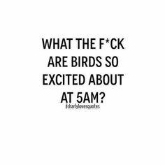 Birds n mornings