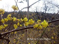 Webpromotion für Ihren Shop: Endlich Frühling im Helenental