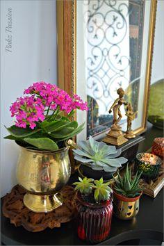 Succulents, succulent decor, global decor, plants at home, green patch