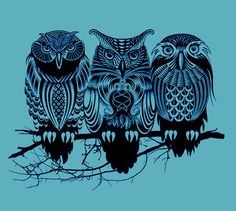 'Owls of the Nile' by Rachel Caldwell