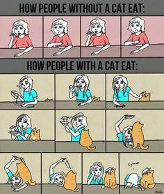Nada como un gato para acompañarnos a la hora de comer
