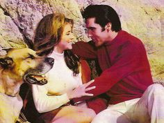 The moment the quirky Bernice, played by Michele Carey, comes on the scene with Albert, her canine enforcer, Live a Little, Love a Little starts to wobble and never quite regains its equilibrium. Seconds after seeing Elvis's character on the beach, Bernice, in effect, kidnaps him for unknown reasons. Her attempt to control Elvis's life is the basis of the picture's storyline, but the viewer is not allowed to know her ultimate objective.