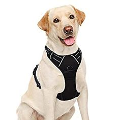 awesome BARKBAY No Pull Dog Harness Large Step in Reflective Dog Harness with Front Clip and Easy Control Handle for Walking Training Running(Black,L) EVERYDAY DOG HARNESS: This No Pull Dog Harness is Constructed from lightweight No Rip Nylon and Anti-Chafe Padding,Perfect for running, hiking and walking GREAT FOR PULLERS: No pull Front leadinghalt ring for more control helping you train them... Big Dogs, Large Dogs, Running Training, Dog Training, Dog Steps, Pink Dog, Dog Harness, Dog Supplies, Dog Beds
