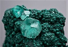 Smithsonite on Rosasite - Namibia Minerals And Gemstones, Rocks And Minerals, Natural Gemstones, Stones And Crystals, Gem Stones, Aquamarine Gem, Mineral Stone, Crystal Collection, Mother Nature