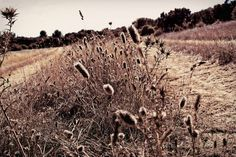 Kakumei - « Champs d'automne » - #packshot #landscape #photoart #freebies