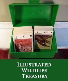 Informational wildlife cards