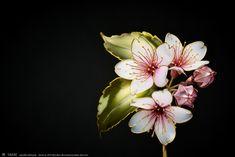 Japon sanatçının botanik esintili, zarif saç aksesuarları - Rotka