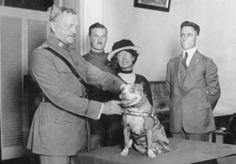 """Sgt. Stubby"" being decorated by General Pershing ~ 1st dog to receive rank  in the military.  He was gassed once, and wounded by shrapnel another time, and once he disappeared for a while, only to resurface with the French forces who returned him to his unit. Stubby even captured a German soldier! Read more about Stubby..."