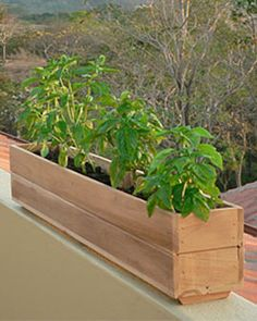 Teak Window Boxes, Small - in 3 Lengths | Gardener's Supply
