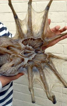"""Reports of a """"giant sea spider"""" have surfaced... - Forum - Alien vs Predator - Universe...great picture of the guy sculpting it... :)"""