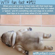 Amazing and fun facts about animals! Other amazing animal facts and more! Wow Facts, Wtf Fun Facts, Random Facts, Amazing Facts, Funny Weird Facts, Random Stuff, Interesting Facts, Unbelievable Facts, Crazy Facts