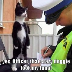 Funny Captions, Funny Cat Memes, Funny Facts, Hilarious, Silly Cats, Cats And Kittens, Funny Animals, Cute Animals, Some Jokes