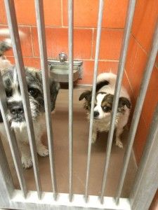 THIS IS AN OUTRAGE!!!!!   Laws under consideration in Illinois could make it more difficult to pull pets from animal control, completely eliminate all adopting shelters and tie the hands of protective animal rescue groups!  This proposed piece of CRAP legislation makes ABSOLUTELY NO SENSE!!!!!