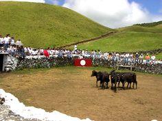Festas tradicionais dos Açores, Touradas na ilha Terceira. Tentadero, ilha Terceira, Açores, Portugal - Terceira - Wikivoyage, guida turistica di viaggio