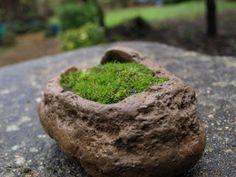 """Voy a explicar cómo consigo la capa de musgo que luego luce tanto en el sustrato del bonsai. Ya sabemos la """"polémica"""" entre los aficionad..."""