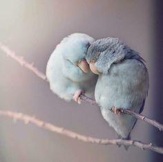 Dreamy Photos of Parrotlet Birds by Rupa Sutton. - Pets World Cute Creatures, Beautiful Creatures, Animals Beautiful, Cute Baby Animals, Animals And Pets, Funny Animals, Nature Animals, Farm Animals, Cute Birds