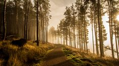 Kielder Water Forest Park, Photography Photos, Biking, Wanderlust, England, Country Roads, Mood, Explore, Gallery