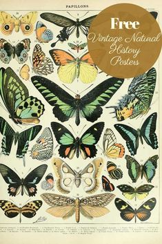 Free vintage natural history posters butterflies a - Claudia Ehmann -You can find Butterflies and more on our website.Free vintage natural history posters b. History Posters, Nature Posters, Illustration Botanique, Illustration Art, Vintage Illustrations, Illustrations Posters, Design Illustrations, Poster Sport, Poster Retro