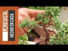 Cómo Hacer un Bonsai bien explicado (Bonchi) | Huerto Urbano Villarreal - YouTube