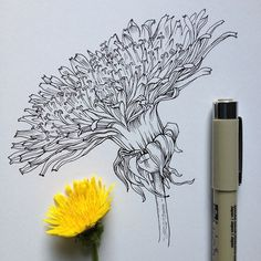Dandelion Flower | Illustration by Noel Badges Pugh