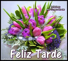 Good Afternoon, Spanish Quotes, Succulents, Floral Wreath, Flowers, Plants, Facebook, Margarita, Bouquets
