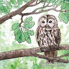 The Tawny owl, already day 10 of , only 90 days left! Now I believe I will finish all of the hundred days, the first ten were really fun to paint! What would you like to see me paint next and would you like me to film my paintings? Owl Watercolor, Watercolor Paintings, Postcard Paper, Tawny Owl, Woodland Art, Forest Illustration, Owl Art, Art Pieces, How To Draw Hands