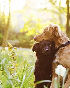 Makes me smile :-) #dog #puppy #pets #animals