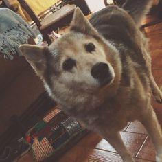 """I love my #Lizzygirl❗️#crazyfarmlife #pottytime #doglover #adventure"" Photo taken by @cassiebshelton on Instagram, pinned via the InstaPin iOS App! http://www.instapinapp.com (07/10/2015)"