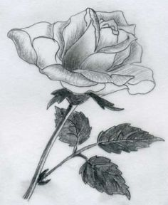 Rose Drawings | You Love Drawing Roses? ~ Kids stories, Pencil Drawings, How to Draw ...