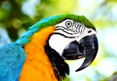 Blue-and-yellow Macaw jigsaw puzzle in Animals puzzles on TheJigsawPuzzles.com