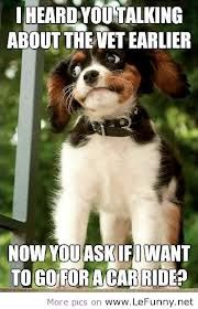 funny dog quotes and pictures - Google Search